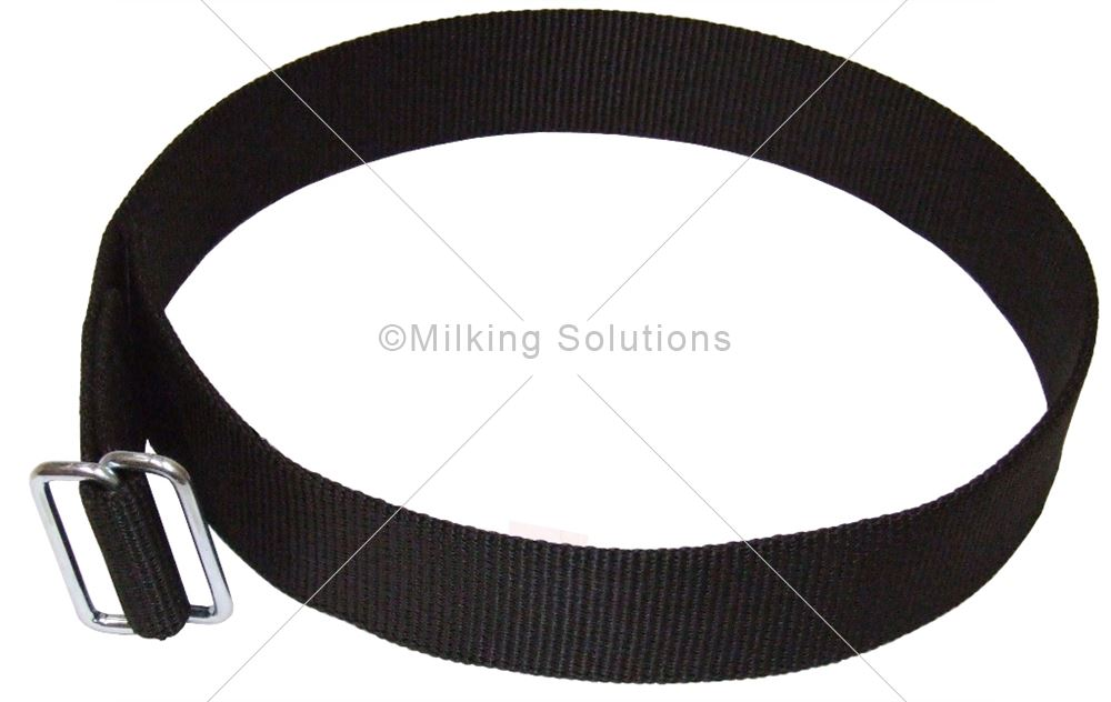 MS Collar Nylon Transponder 80cm x 4cm x 4mm Calf